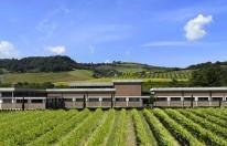 Over het wijnhuis